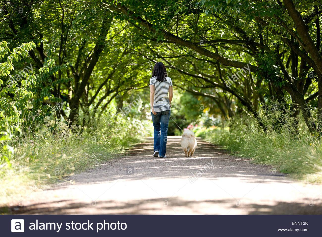 eine junge frau die ihren hund spazieren gehen im sommer r ckansicht stockfoto bild. Black Bedroom Furniture Sets. Home Design Ideas