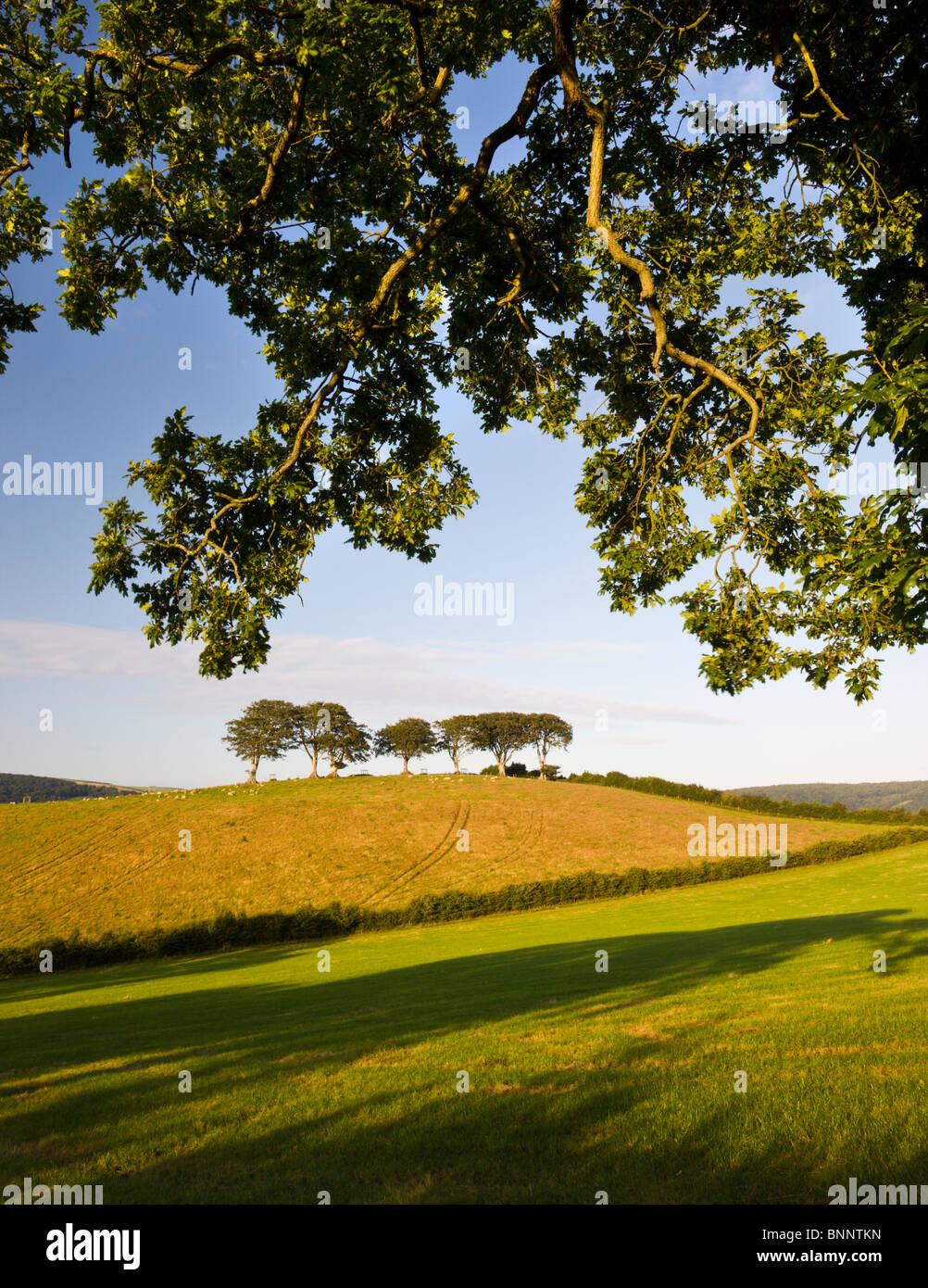 Sommer Exmoor Landschaft Szenen zwischen den Dörfern Horner und Luccombe, Exmoor National Park, Somerset, England. Stockbild