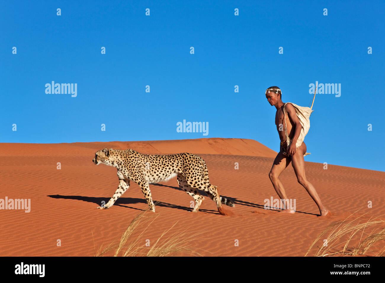 San-Jäger bewaffnet mit traditionellen Bogen und Pfeil mit Gepard Stockfoto