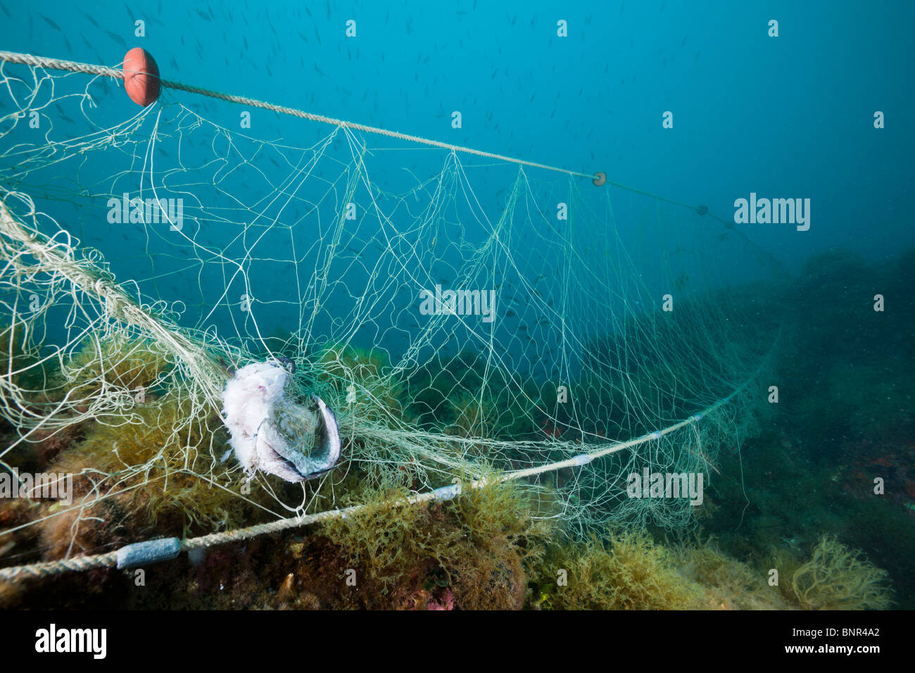 Fishing Net verloren über Riff, Cap de Creus, Costa Brava, Spanien Stockbild