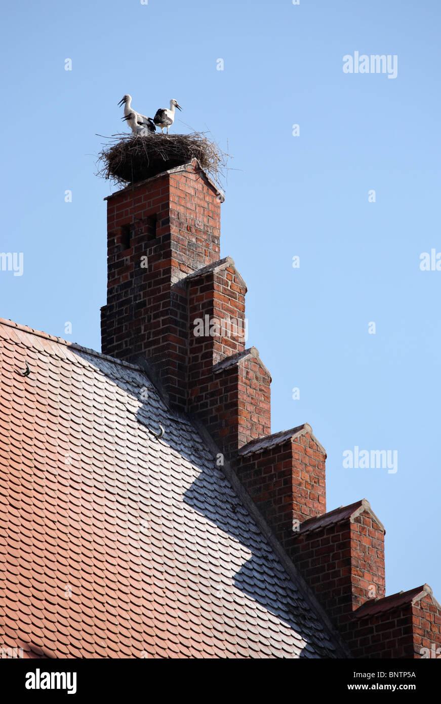 Störche nisten auf Tangermünde Rathaus oder Rathaus, Deutschland, Europa. Stockbild