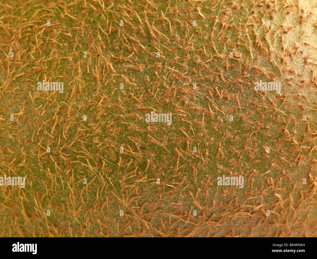 Kiwi Frucht Haut Stockbild