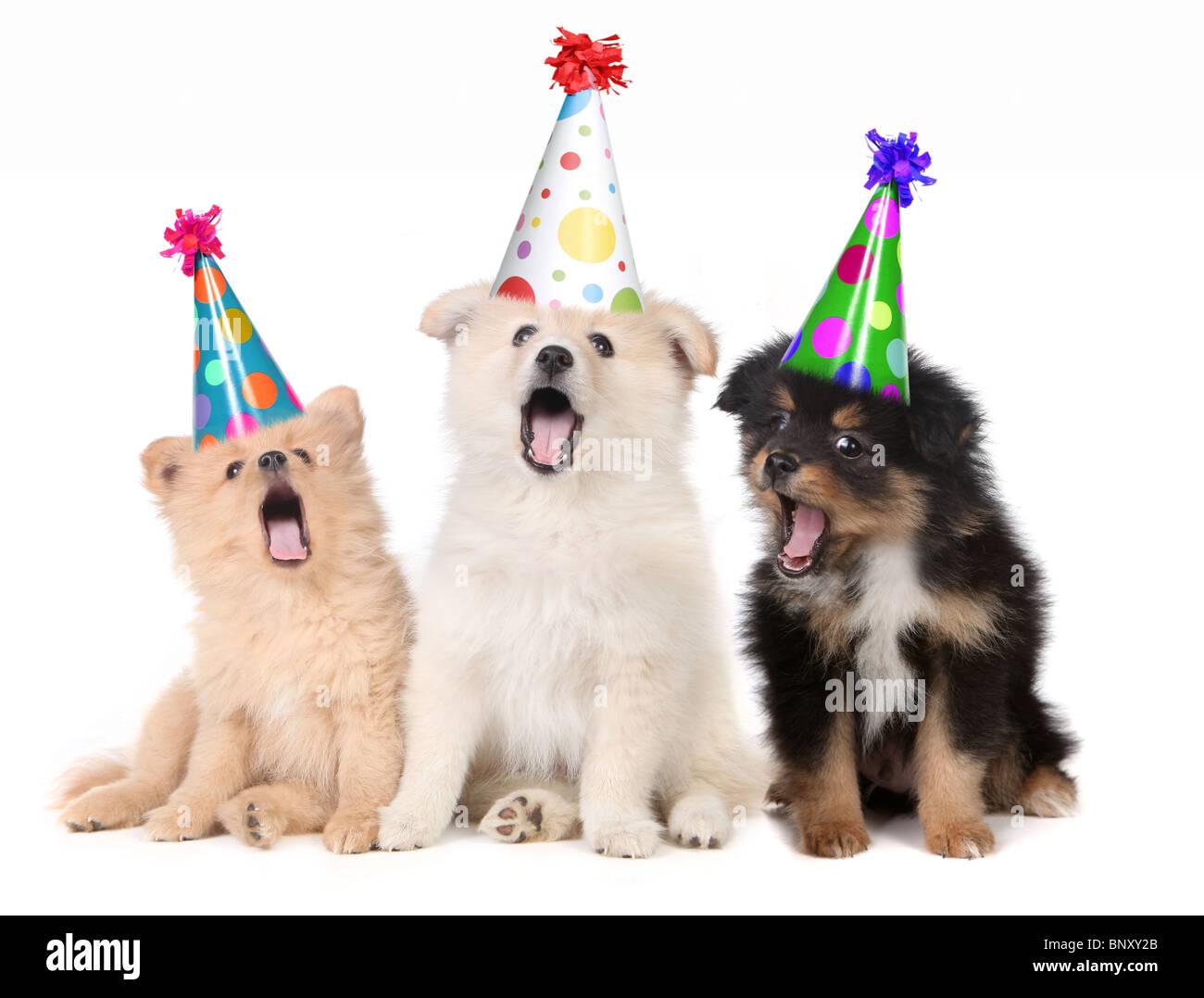 Humorvolle Welpen Singen Happy Birthday Song Tragen Alberne Hute Stockbild
