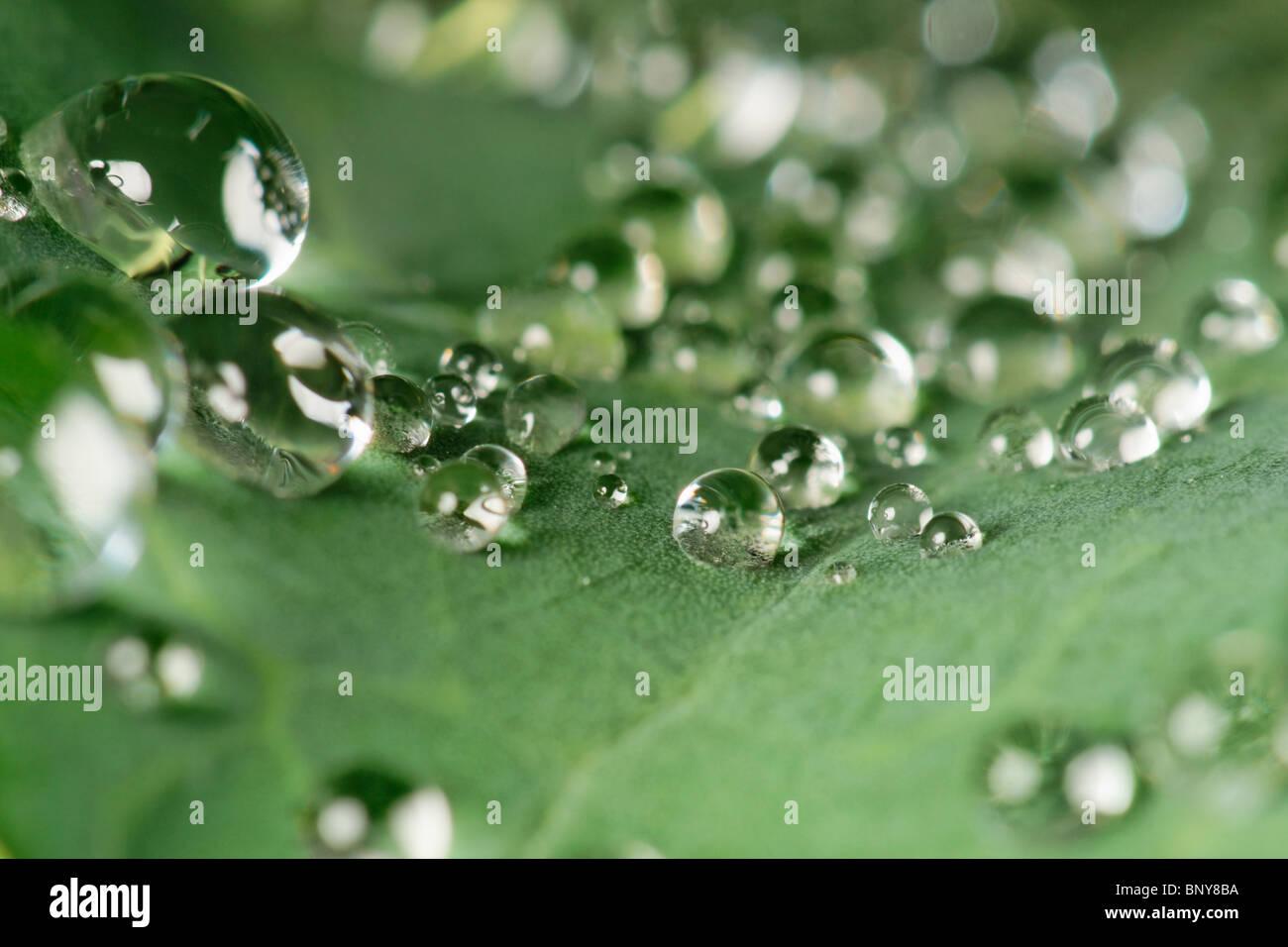 Wassertropfen auf Kohlblatt Stockbild