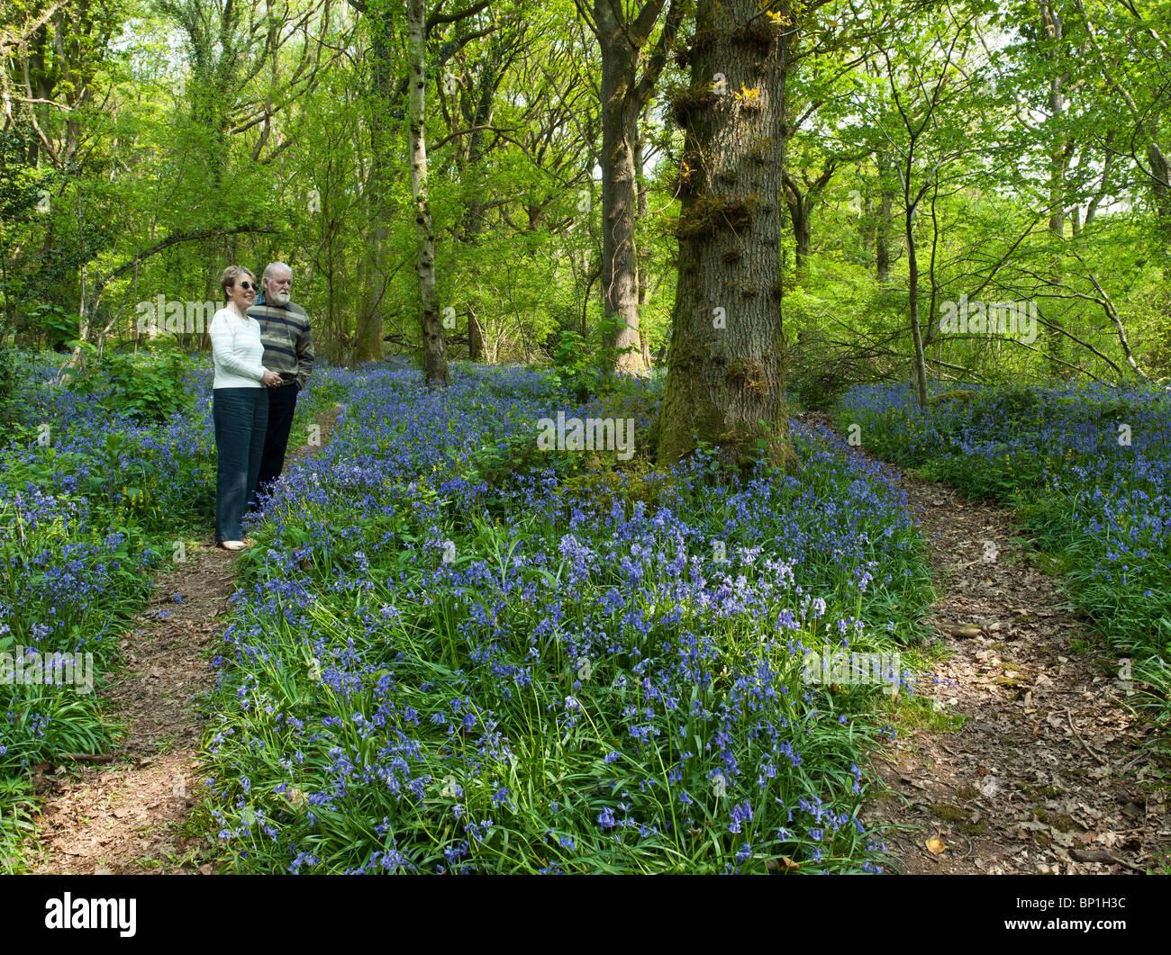 EHEPAAR IM RUHESTAND ZU FUß DURCH BLAUE GLOCKEN IM WALD WYE VALLEY UK Stockfoto