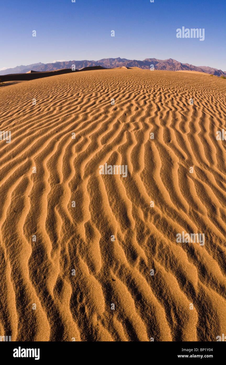 Abendlicht auf Düne Muster, Mesquite flache Sanddünen, Death Valley National Park. California Stockfoto