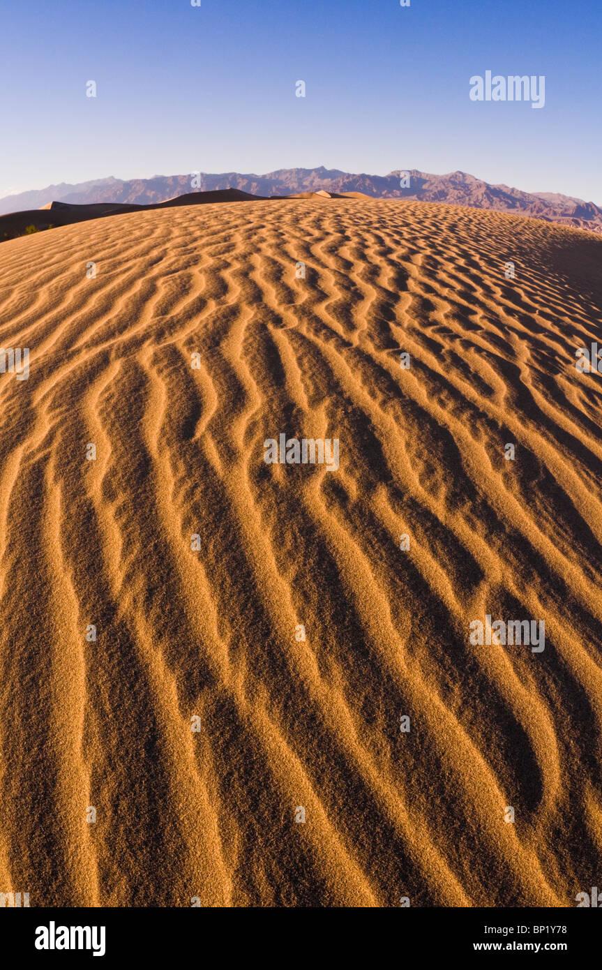 Abendlicht auf Düne Muster, Mesquite flache Sanddünen, Death Valley National Park. California Stockbild