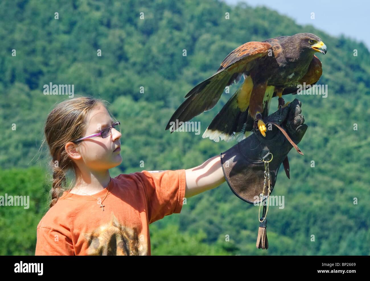 Junge Mädchen und Harris Hawk Stockbild