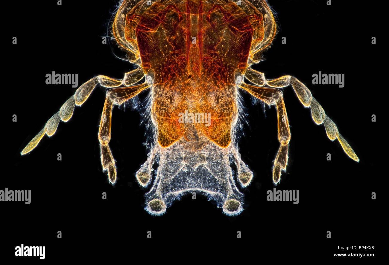 dunkelfeld mikrophotographie der wespe mundwerkzeuge allgemeine struktur anzeigt stockfoto. Black Bedroom Furniture Sets. Home Design Ideas