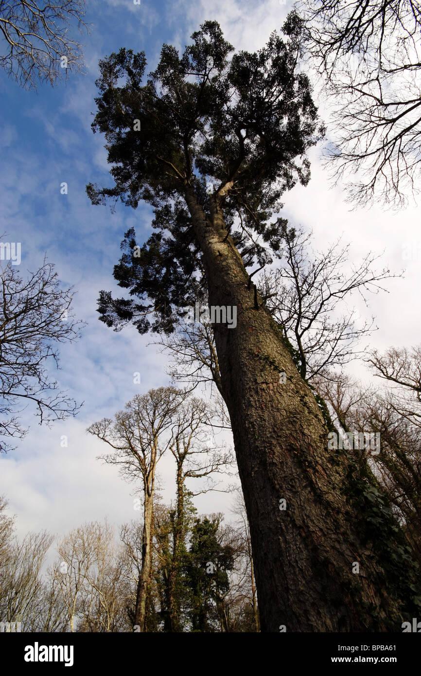schräge Baum Stockbild