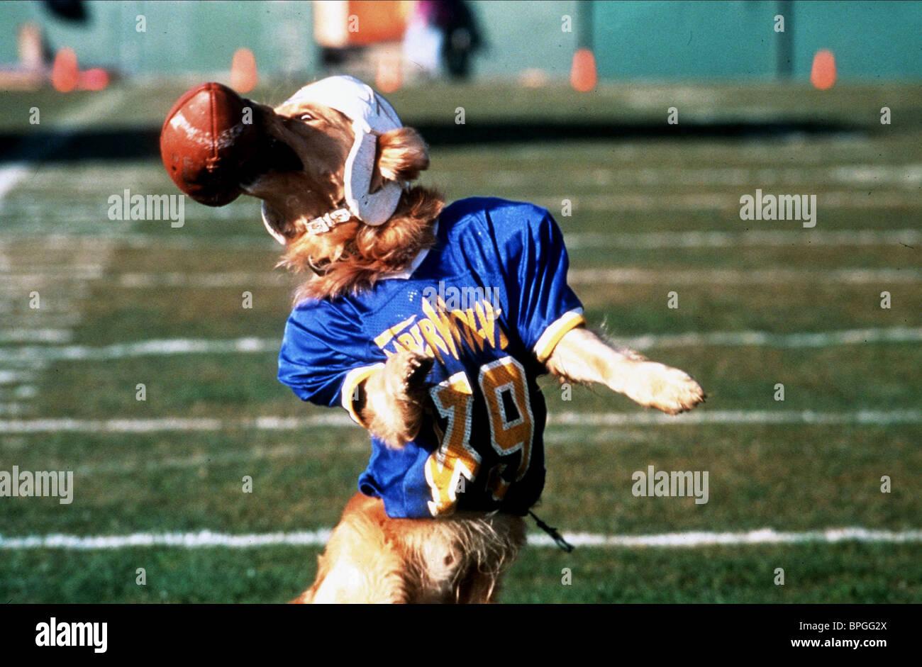 KUMPEL AIR BUD: GOLDEN RECEIVER; AIR BUD 2 (1998) Stockbild