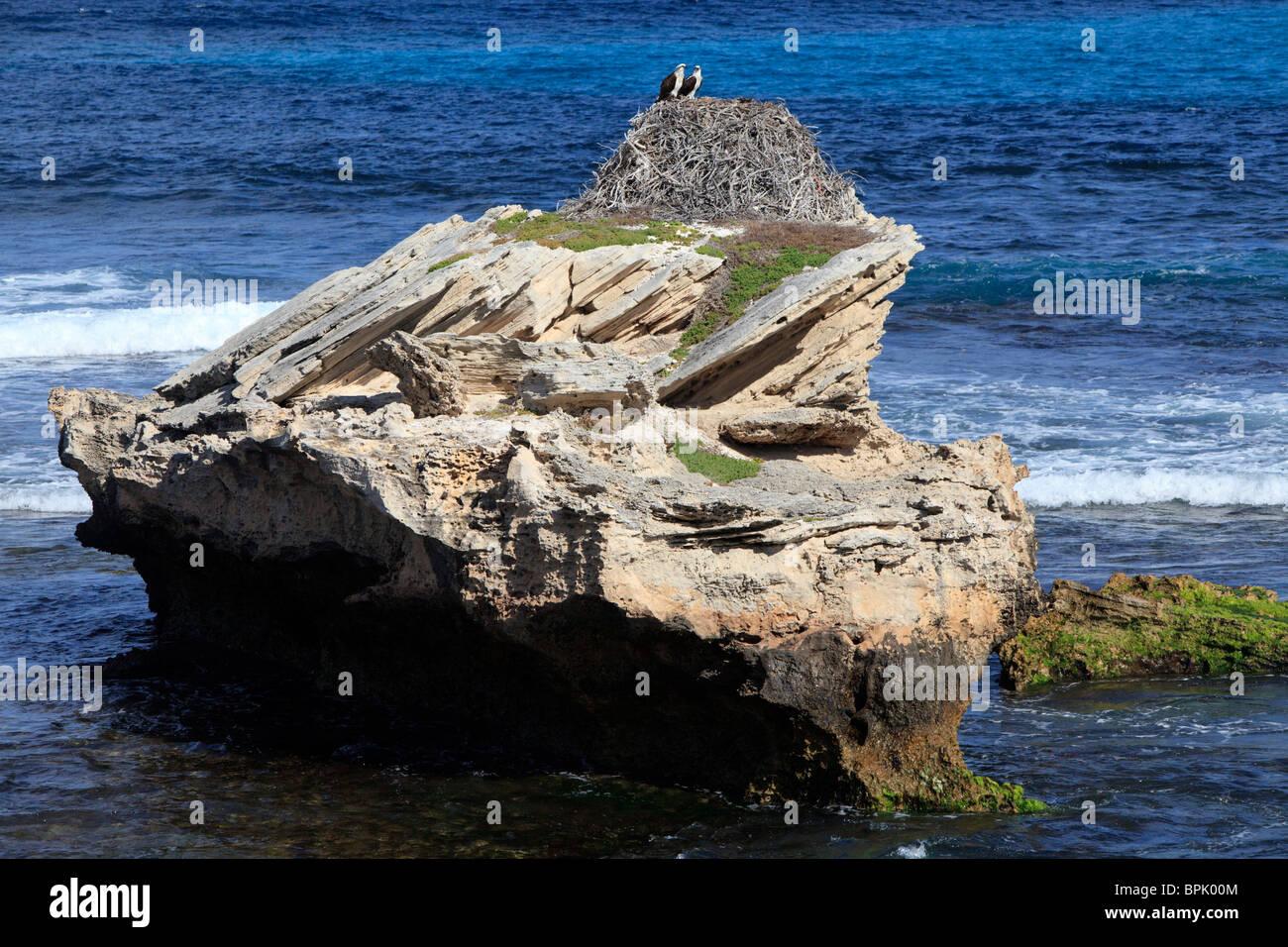 70 Jahre alten osprey Nest Stockbild