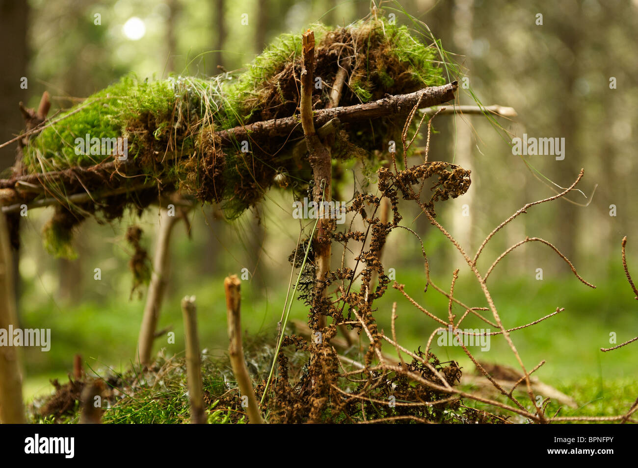 wooden house dwarf in forest stockfotos wooden house dwarf in forest bilder alamy. Black Bedroom Furniture Sets. Home Design Ideas