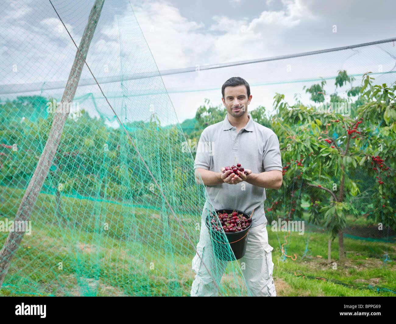 Mann mit Eimer Kirschen im Obstgarten Stockbild