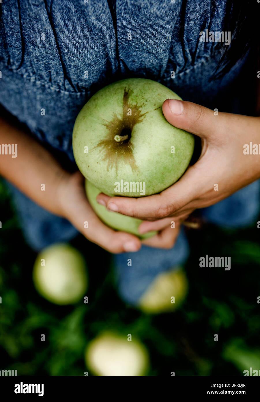 Ein junges Mädchen hält grüne Äpfel in einer Apfelplantage in Calhoun County, Illinois am 28. Stockbild