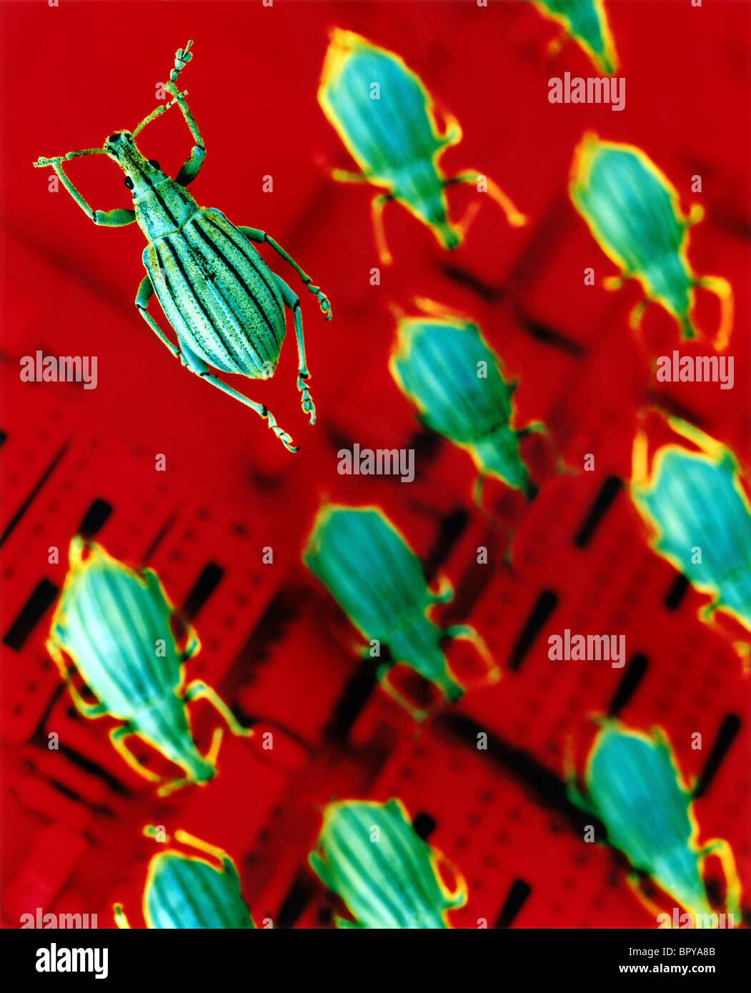 Computer-Bugs, Computer-Virus und Software Virus werden spielerisch in diesem Bild erfasst. Stockbild