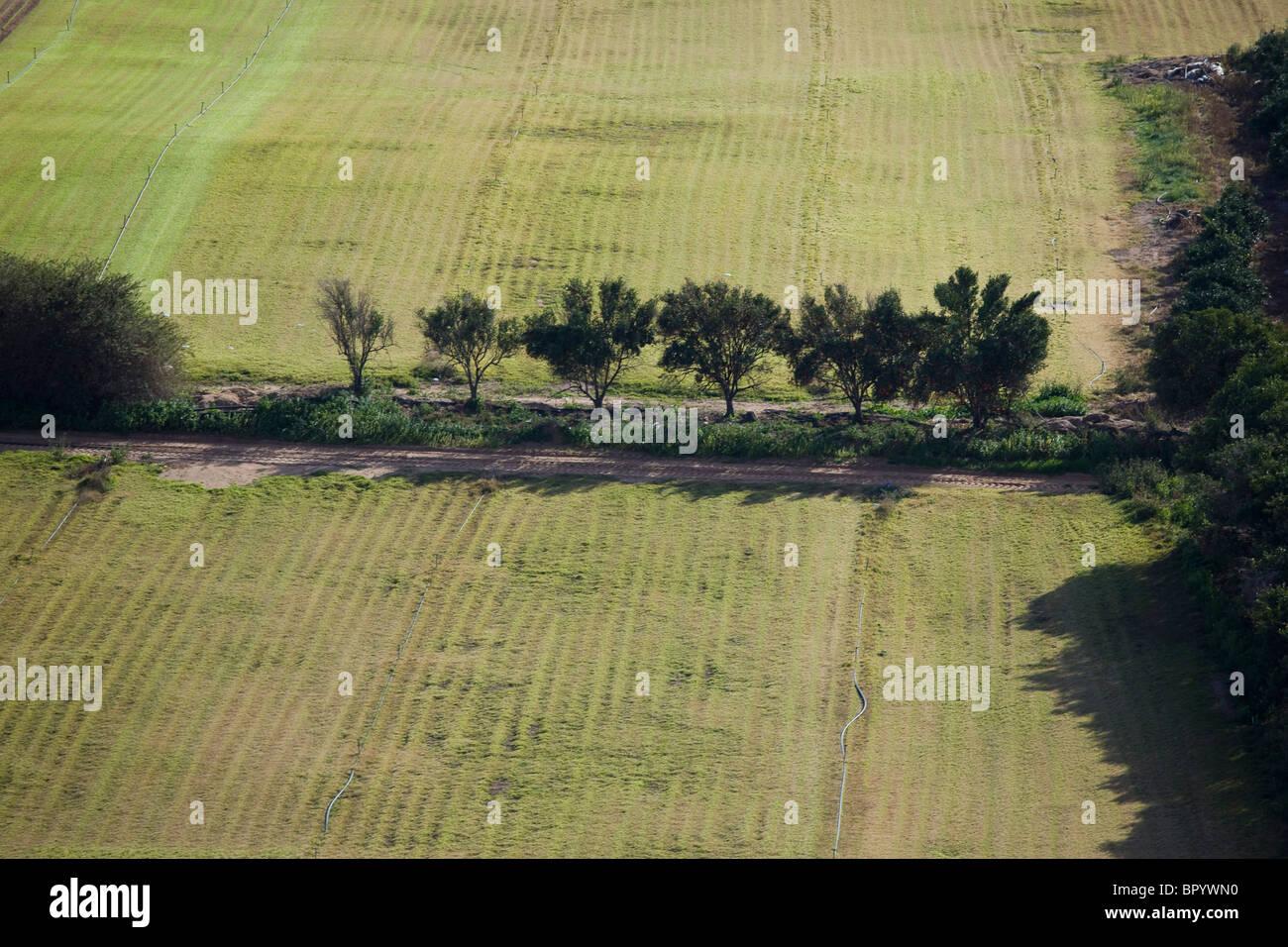 Luftaufnahme der Landwirtschaft Felder des Galiläa Stockbild