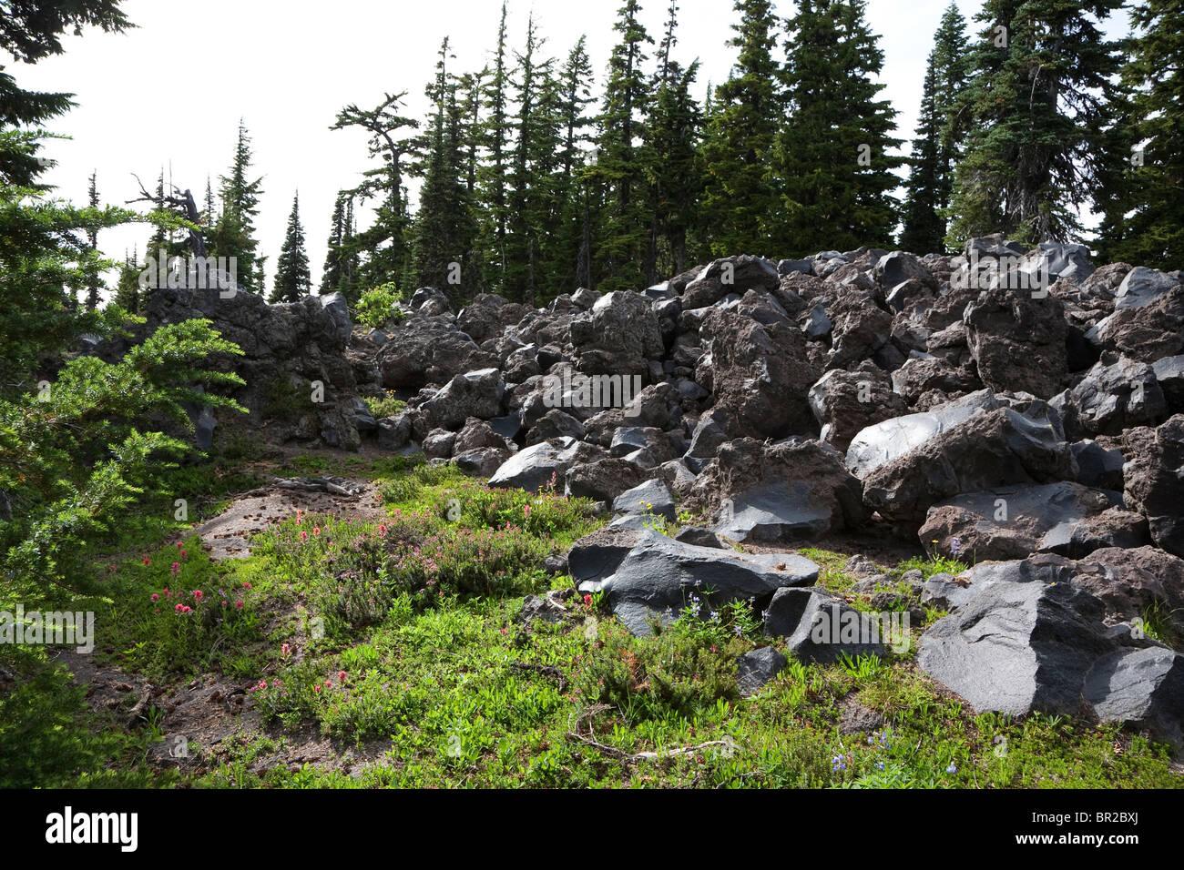 Lava Bett Mit Sommer Wildblumen Auf Dem Pacific Crest Trail Mount