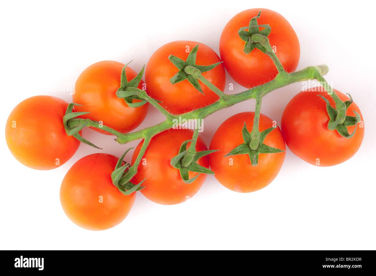 Tomaten am Rebstock Stockbild