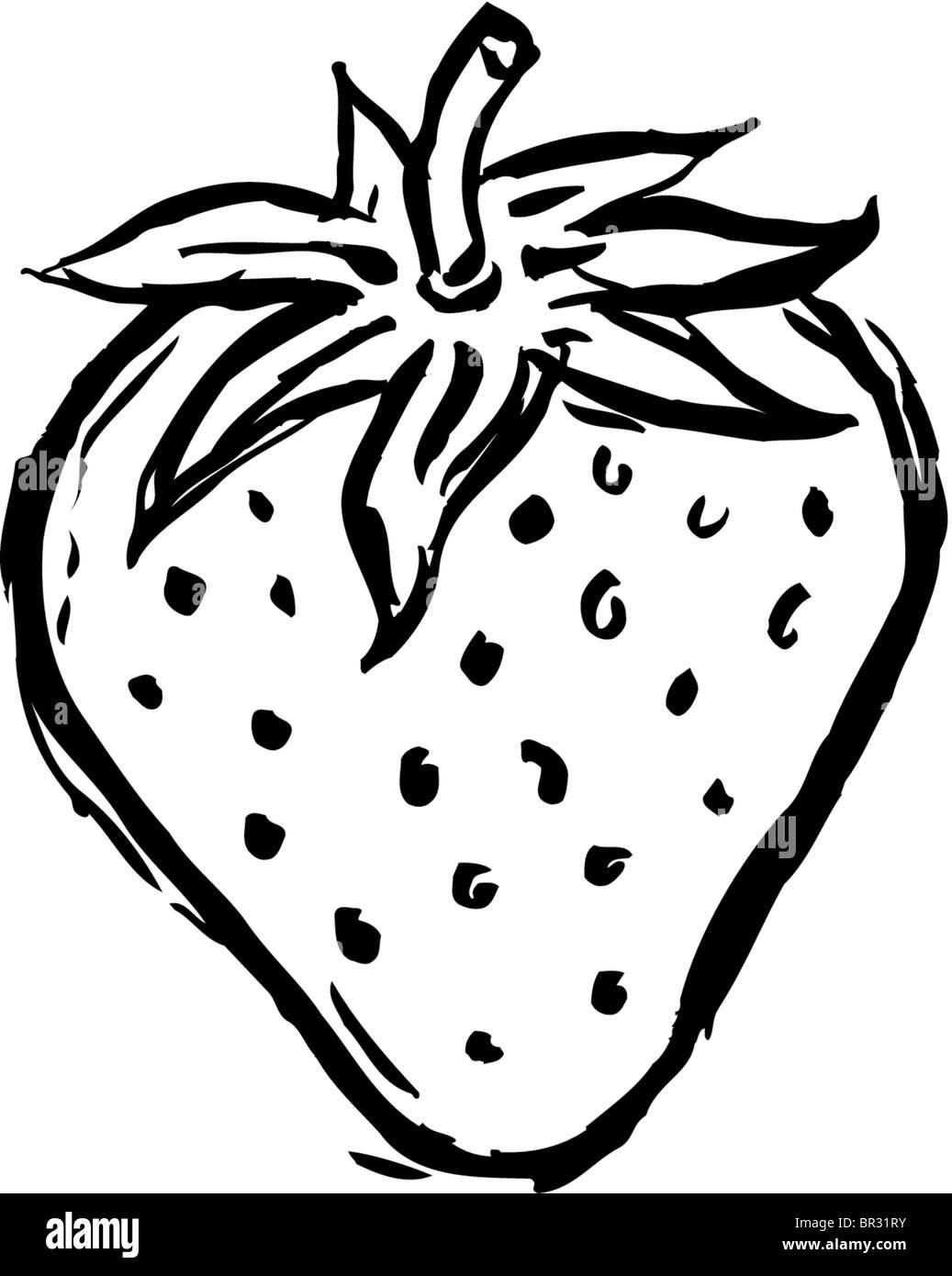 ein schwarz wei zeichnung eine erdbeere stockfoto bild 31414767 alamy. Black Bedroom Furniture Sets. Home Design Ideas