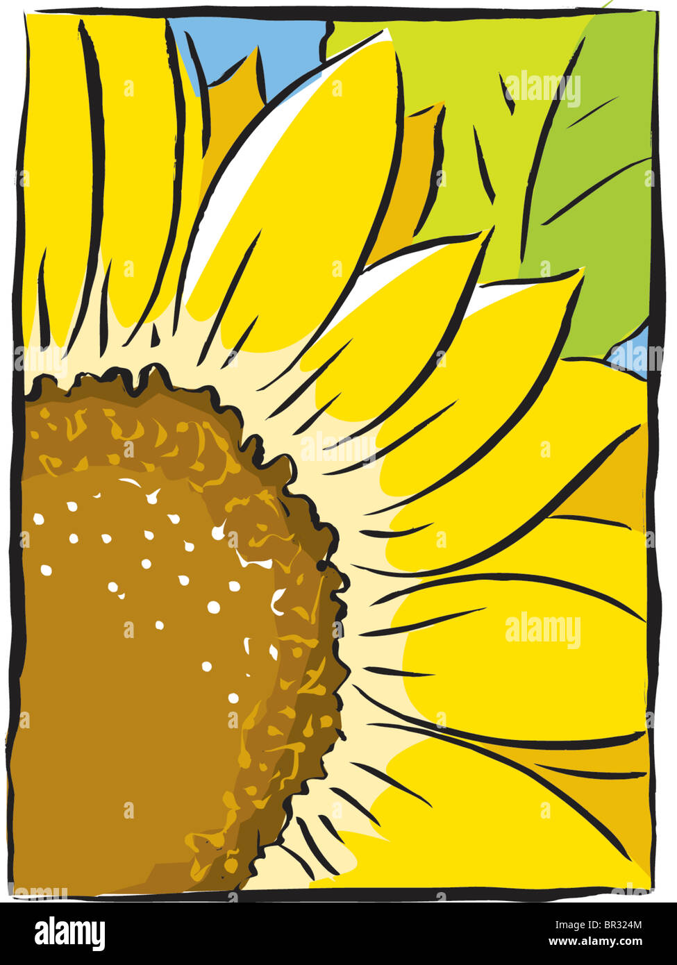 Sonnenblume Nahaufnahme Stockbild