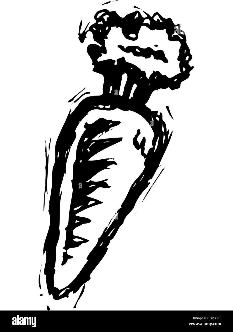 Eine Karotte In Schwarz Weiß Gezeichnet Stockfoto Bild 31416099