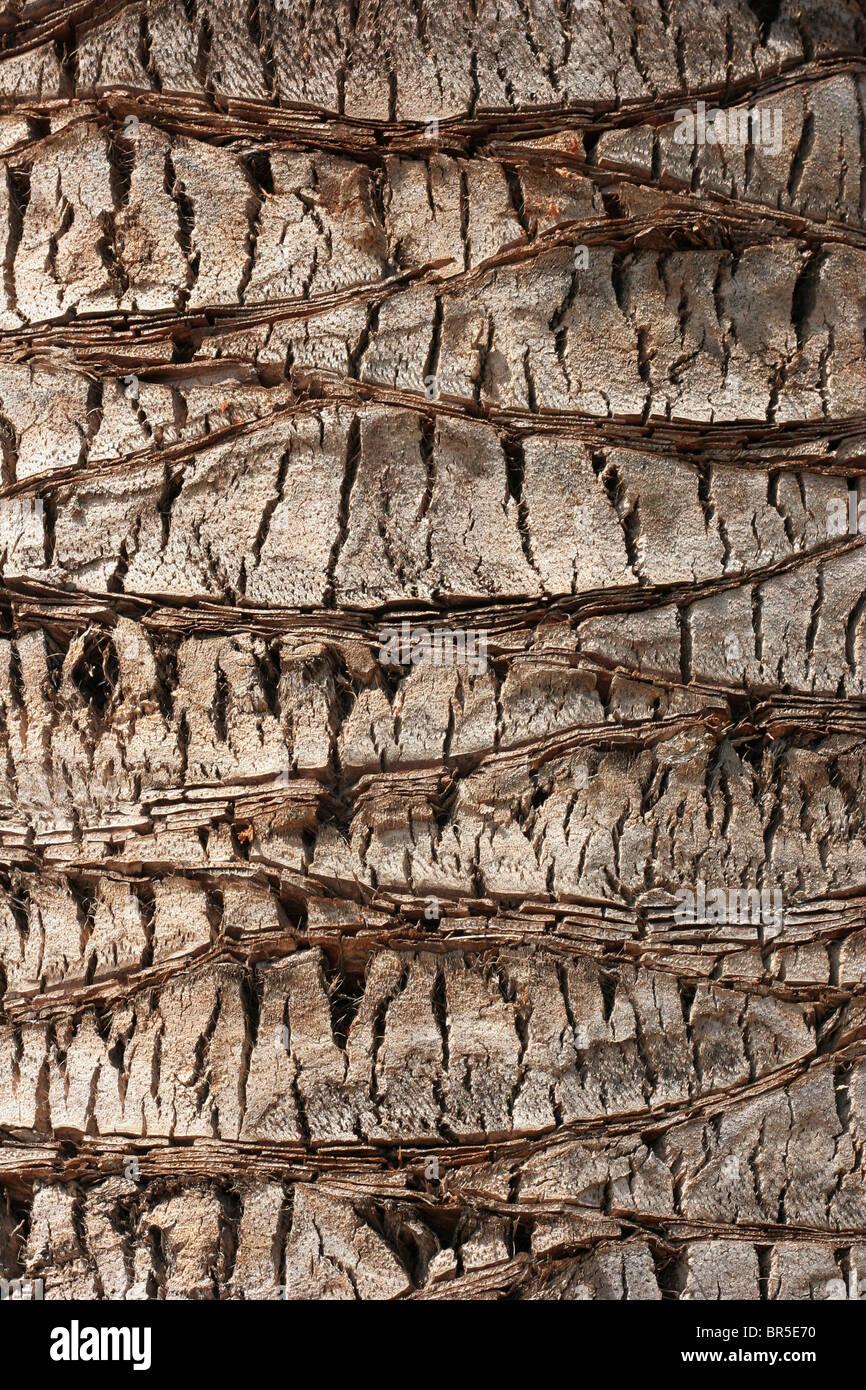Muster in der Rinde einer Palme Stockfoto