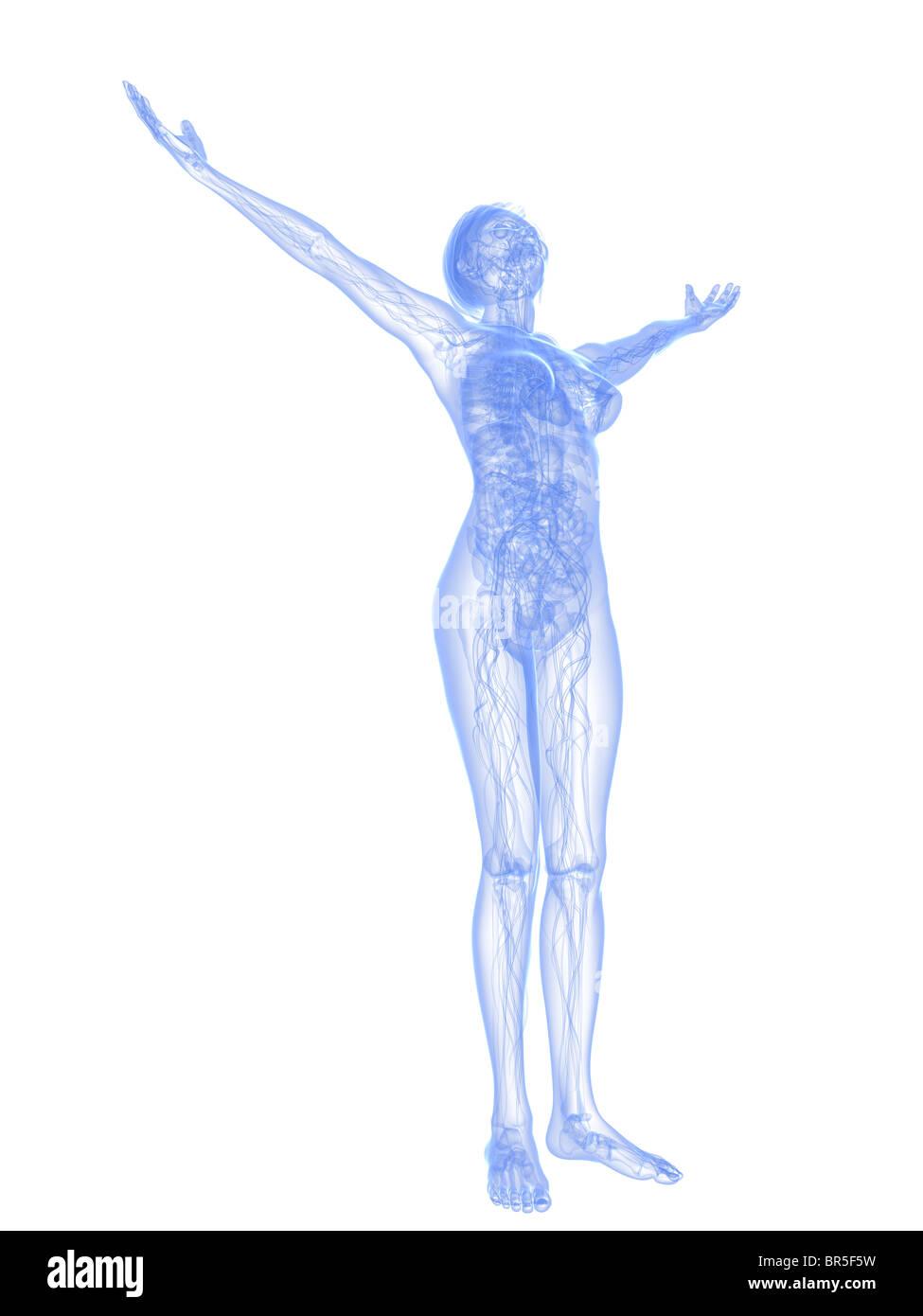 Fein Menschliche Weibliche Anatomie Diagramm Zeitgenössisch ...