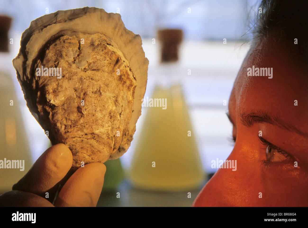 Auster-Forscher in Baltimore MD. Stockbild