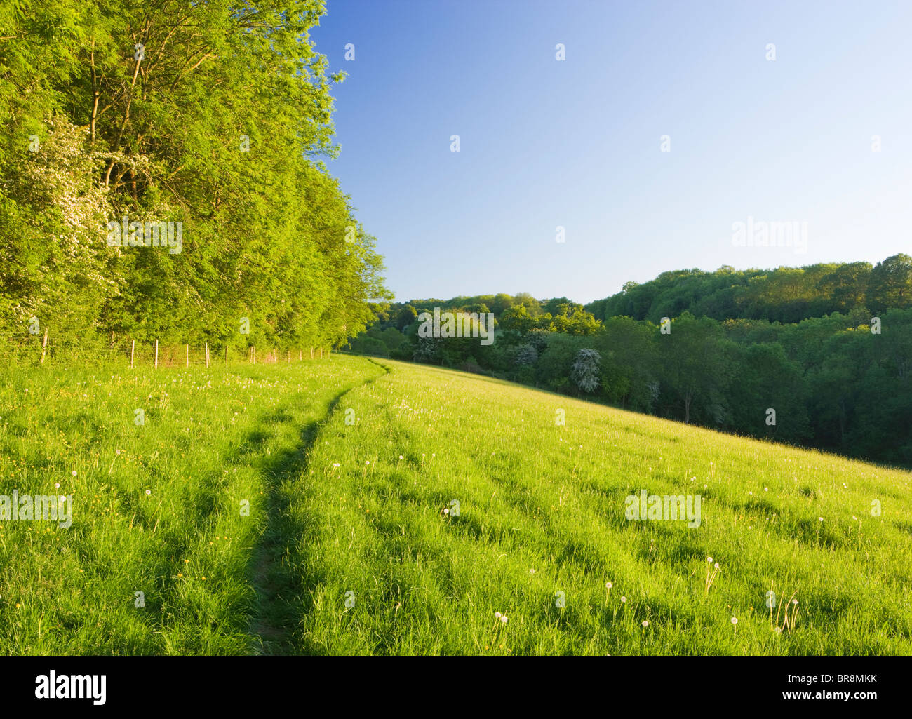 Weg durch Feld, North Downs unter Ranmore, in der Nähe von Dorking, Surrey, UK Stockfoto