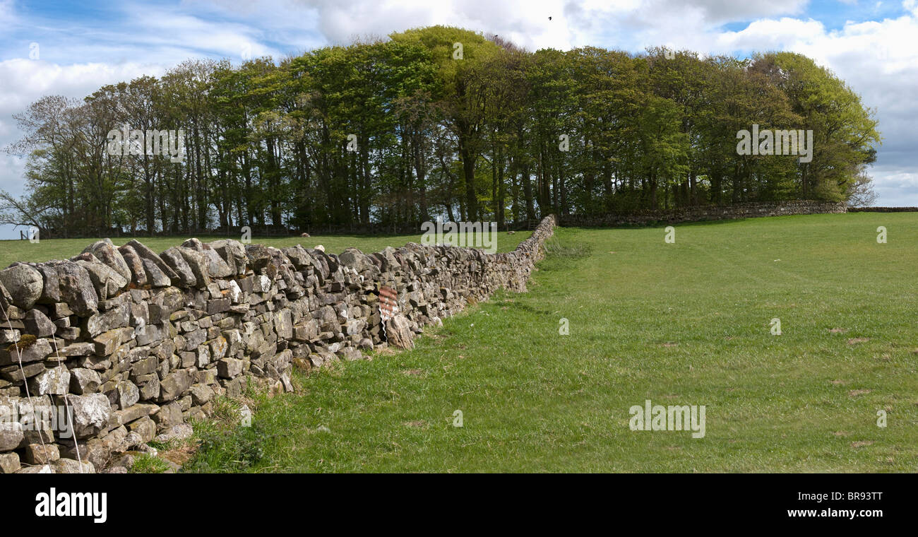 Eine Steinmauer In einem Feld; Northumberland, England Stockbild