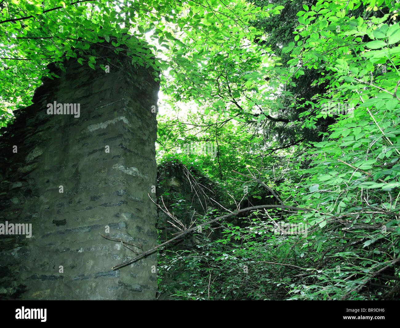 Ruinen von Wohnhaus - üppige Vegetation nach Regenschauer (in der Nähe von Dorf von Ascona) - Kanton Tessin Stockbild