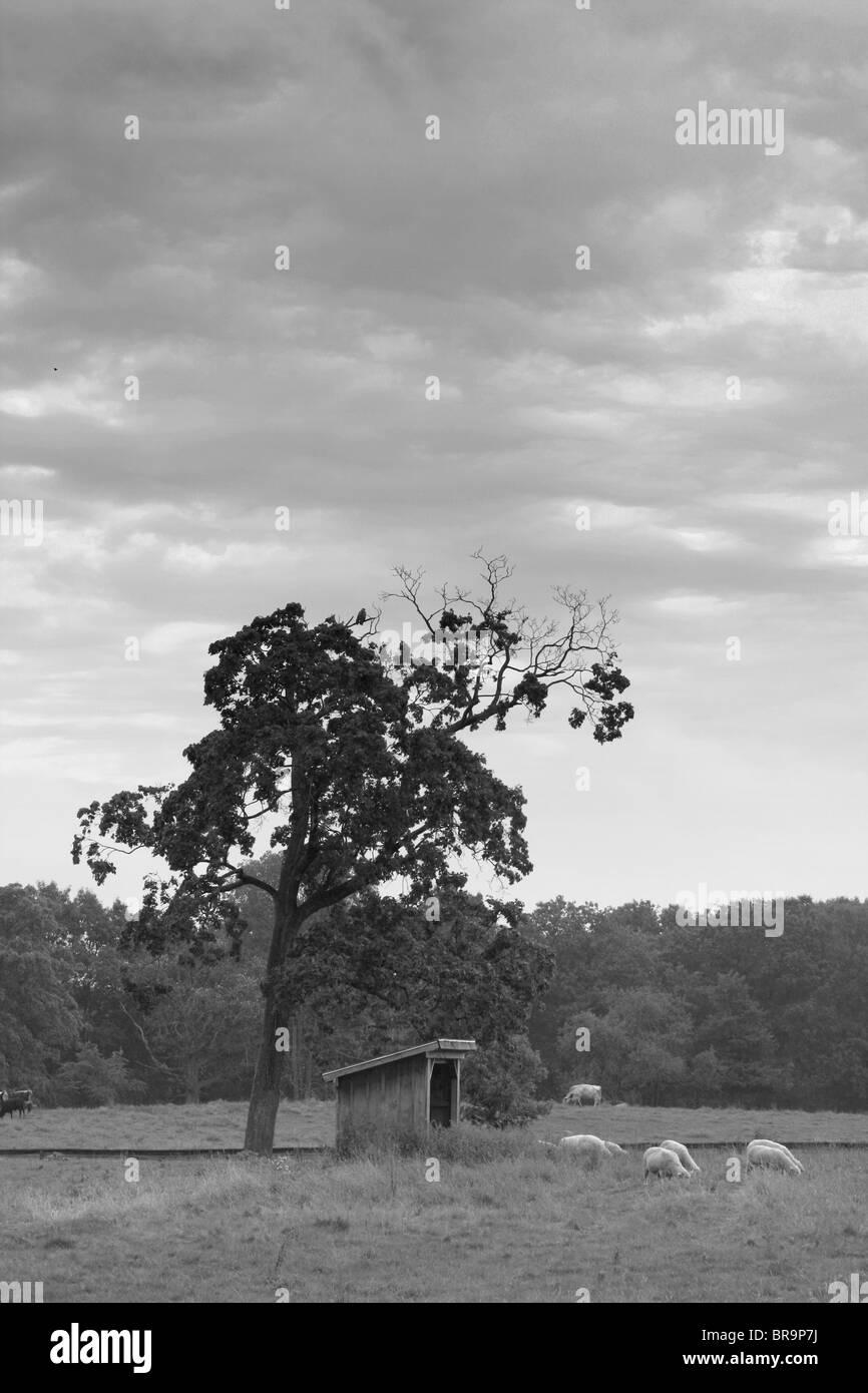 Der Baum auf einem Bauernhof. Stockbild