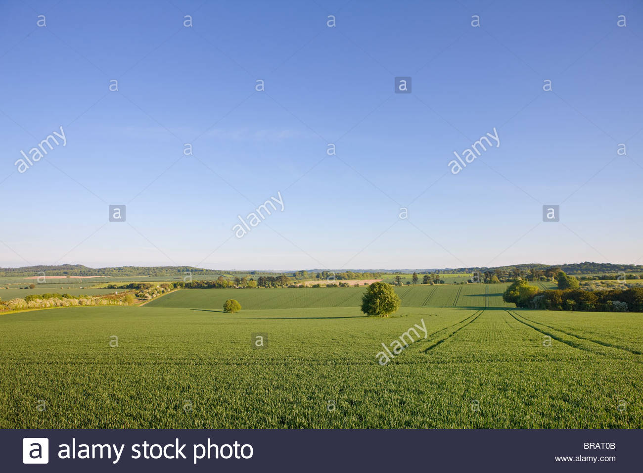 Blauer Himmel über ruhige Landschaft Ackerland Stockbild