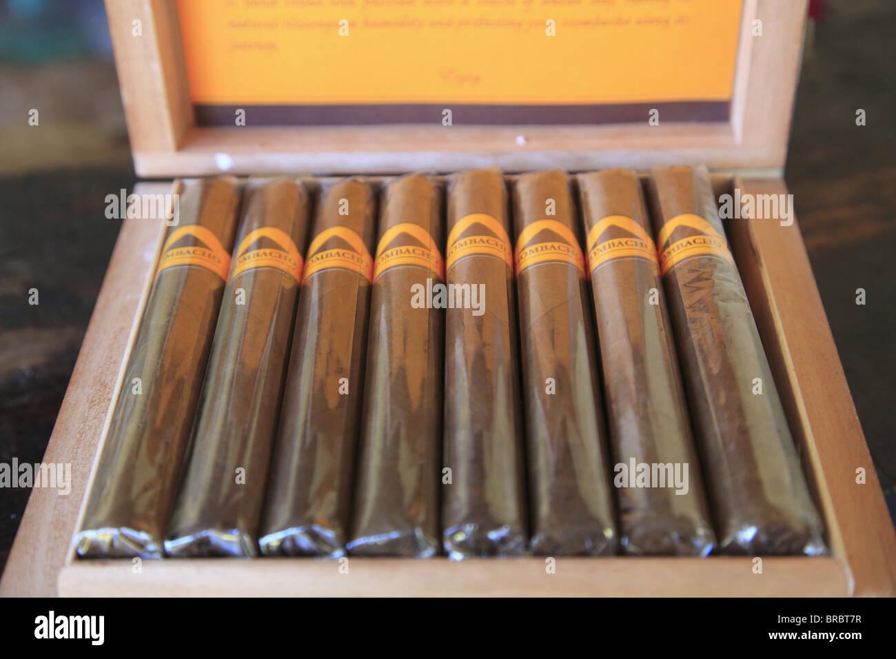 Dona Elba Zigarren, Zigarrenmacher, Granada, Nicaragua, Mittelamerika Stockbild