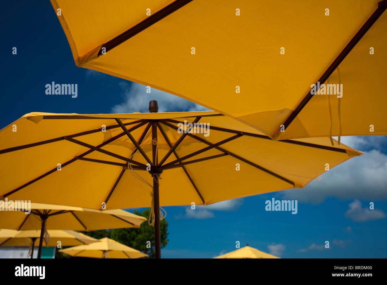 Gelb gold Strand Sonnenschirme tropischen Umgebung Stockbild