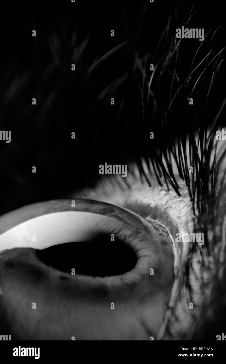Auge, detail Stockbild