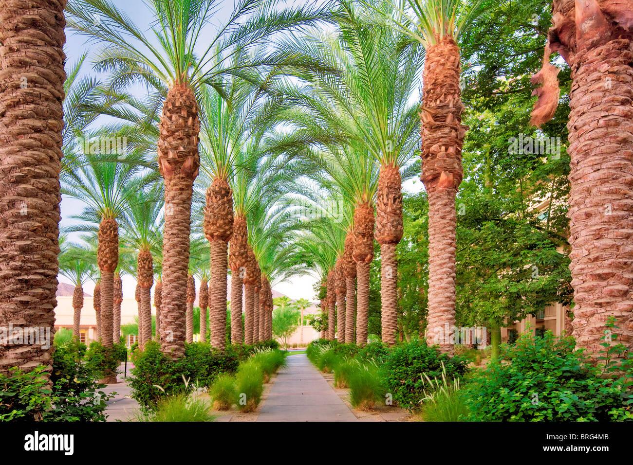 Palm, von Bäumen gesäumten Weg. Hyatt. Indian Wells, Kalifornien Stockbild