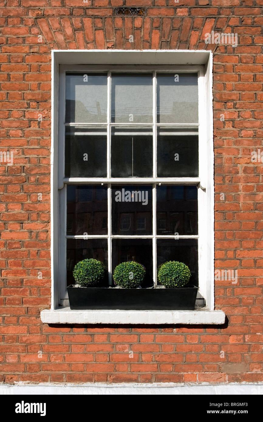Georgische Fenster in Dublin, Irland Stockbild