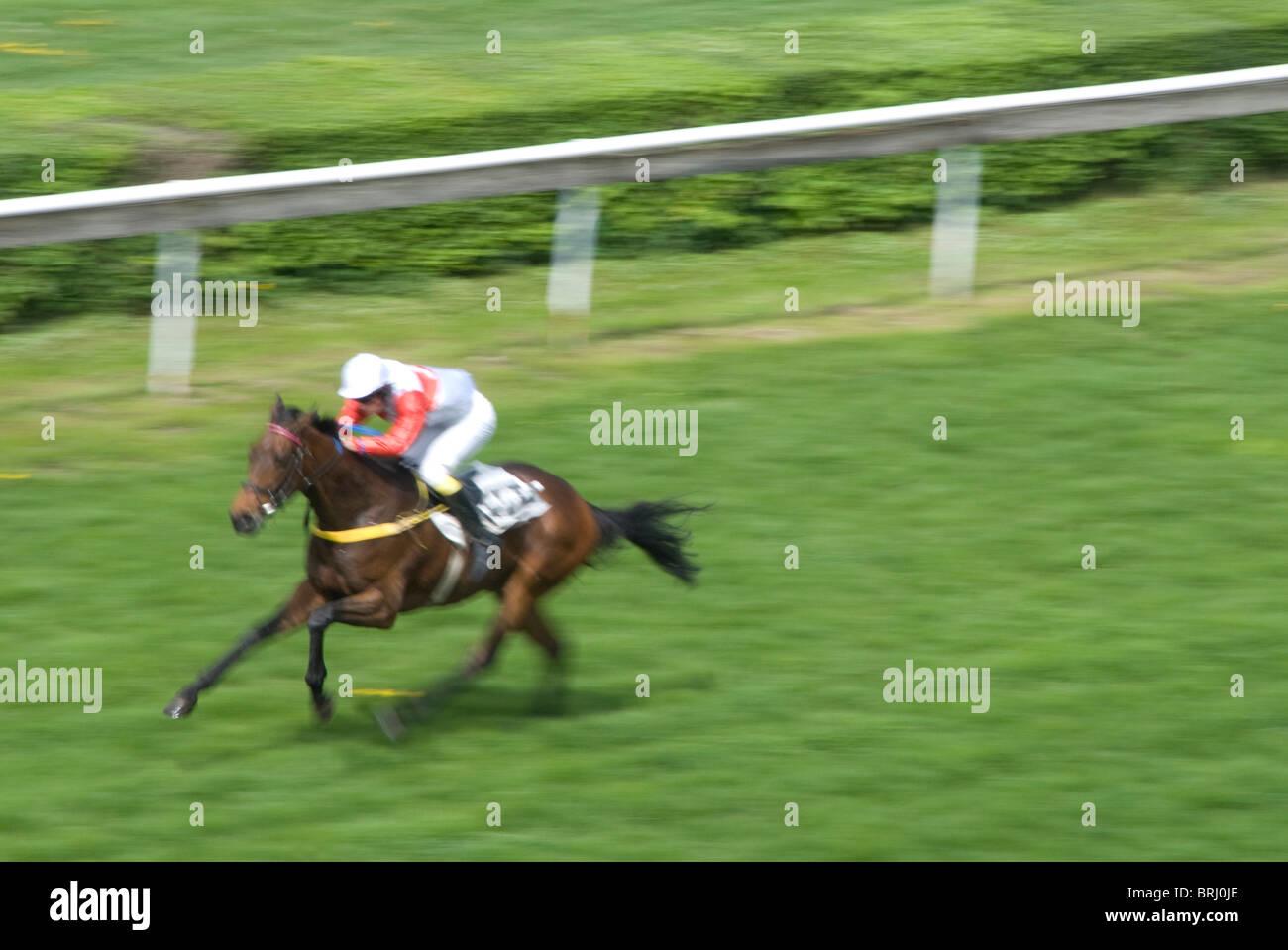 Sprint für den Erfolg in einem Pferderennen Stockbild