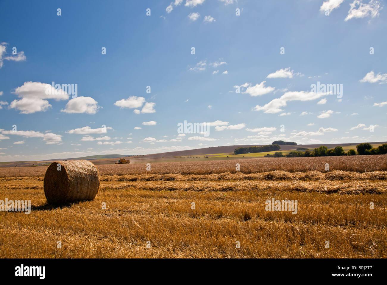 Heuernte in Feldern in der Nähe von Roundway Down, Wiltshire, England, UK Stockbild