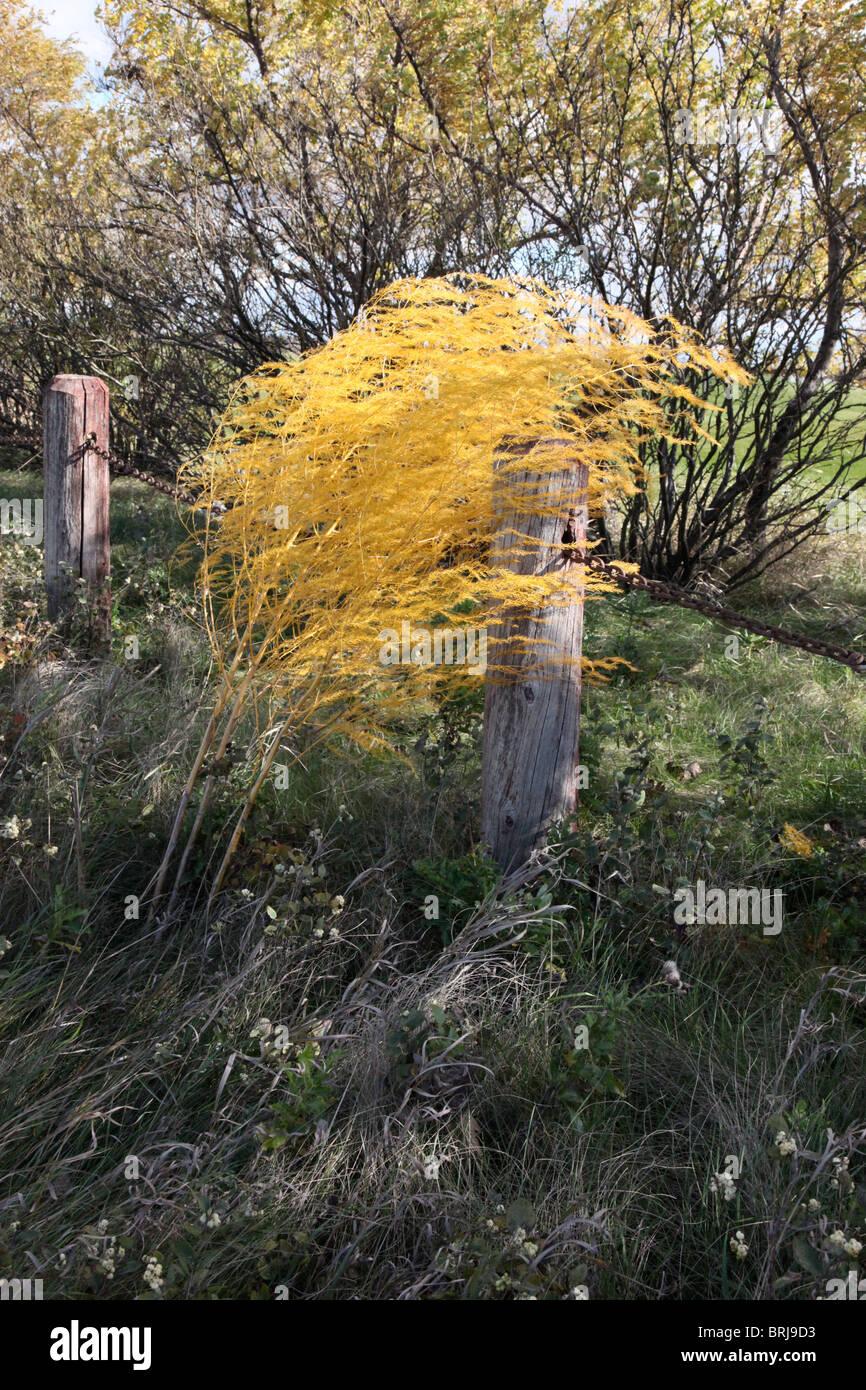 Herbst herein wie eine Flamme der Leidenschaft eine goldene Flamme der leidenschaftliche wind Stockbild