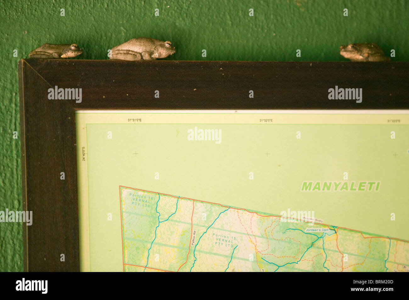 South Africa Frogs Stockfotos & South Africa Frogs Bilder - Alamy