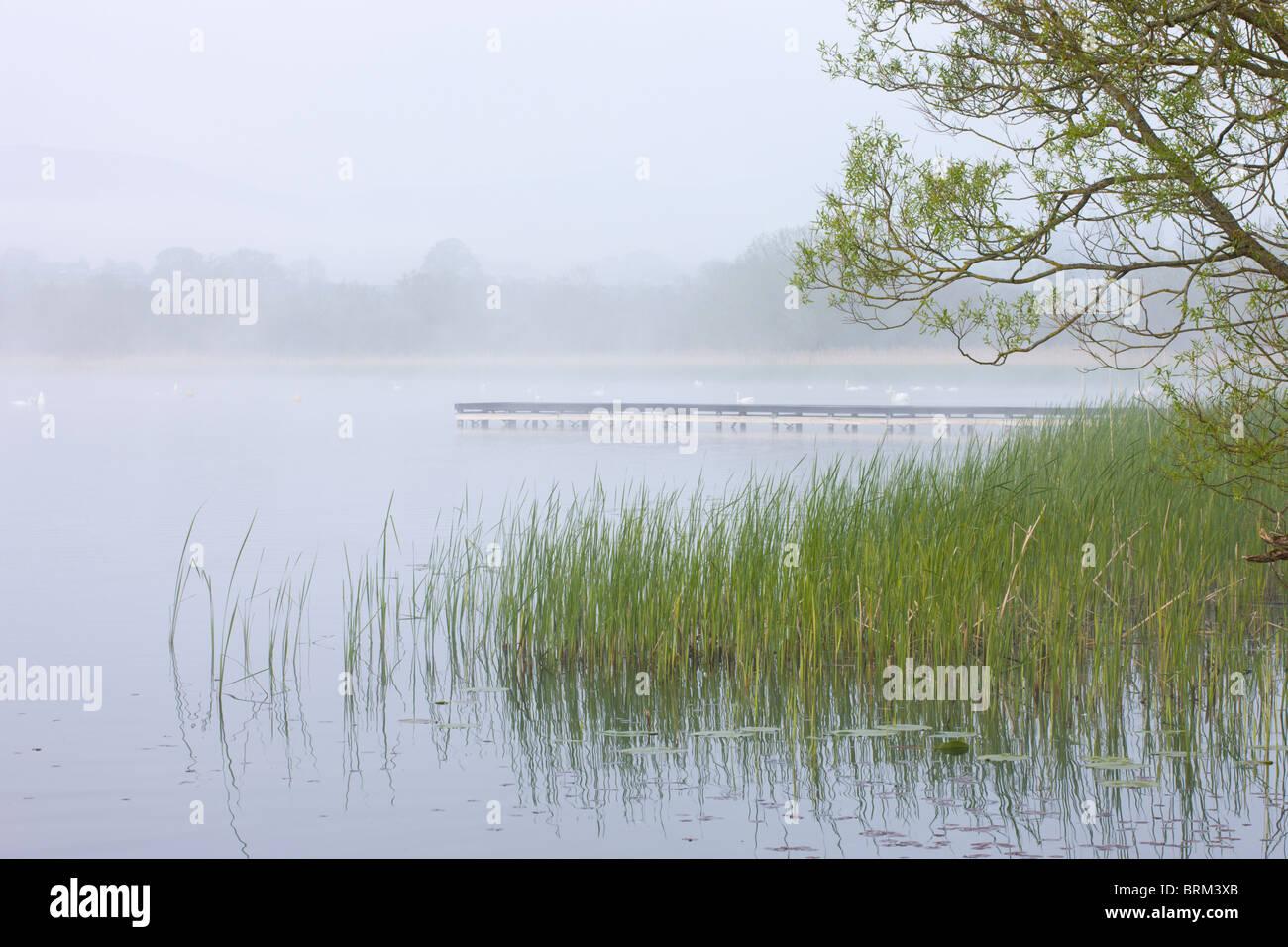 Am frühen Morgennebel hüllt Llangorse See in den Brecon Beacons National Park, Powys, Wales. Frühjahr Stockbild