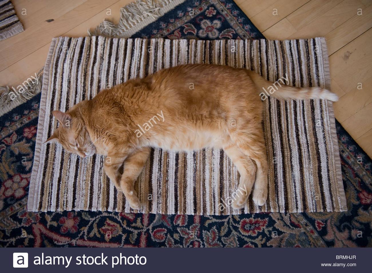 Eine Katze liegt friedlich auf einem Teppich in Lincoln, NE. Stockbild