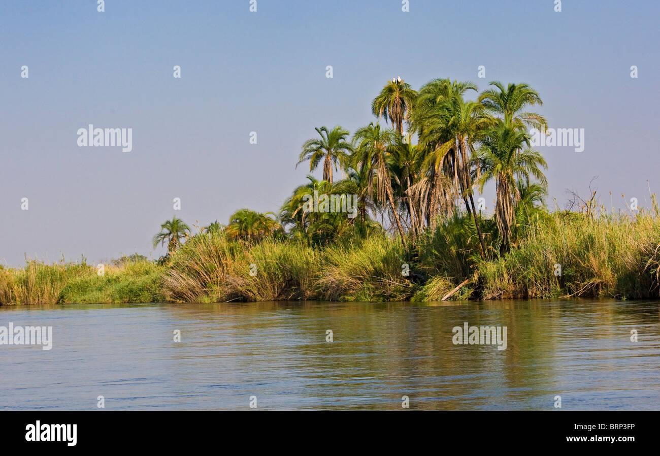 Malerischen Blick auf den Okavango-Fluss gesäumt von Palmen und ein paar afrikanische Fischadler sitzt an der Stockbild