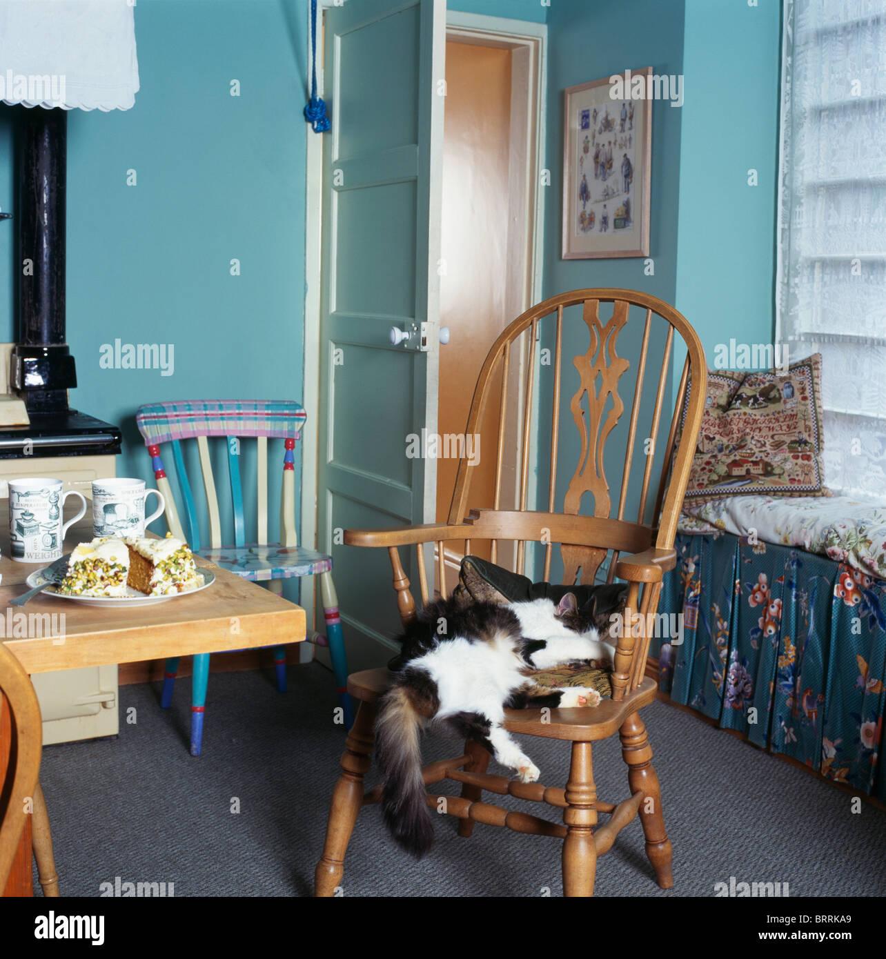 Schwarz + weiße Katze liegend auf Windsor Stuhl in kleine ...
