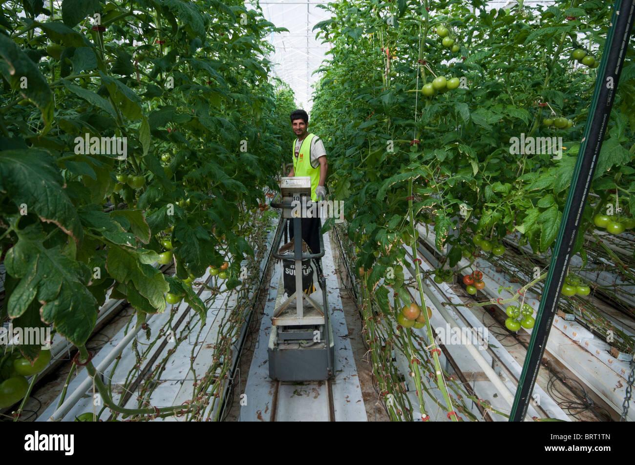 Arbeiter Die Verbreitung Von Schwefel Zum Schutz Vor Schimmel In