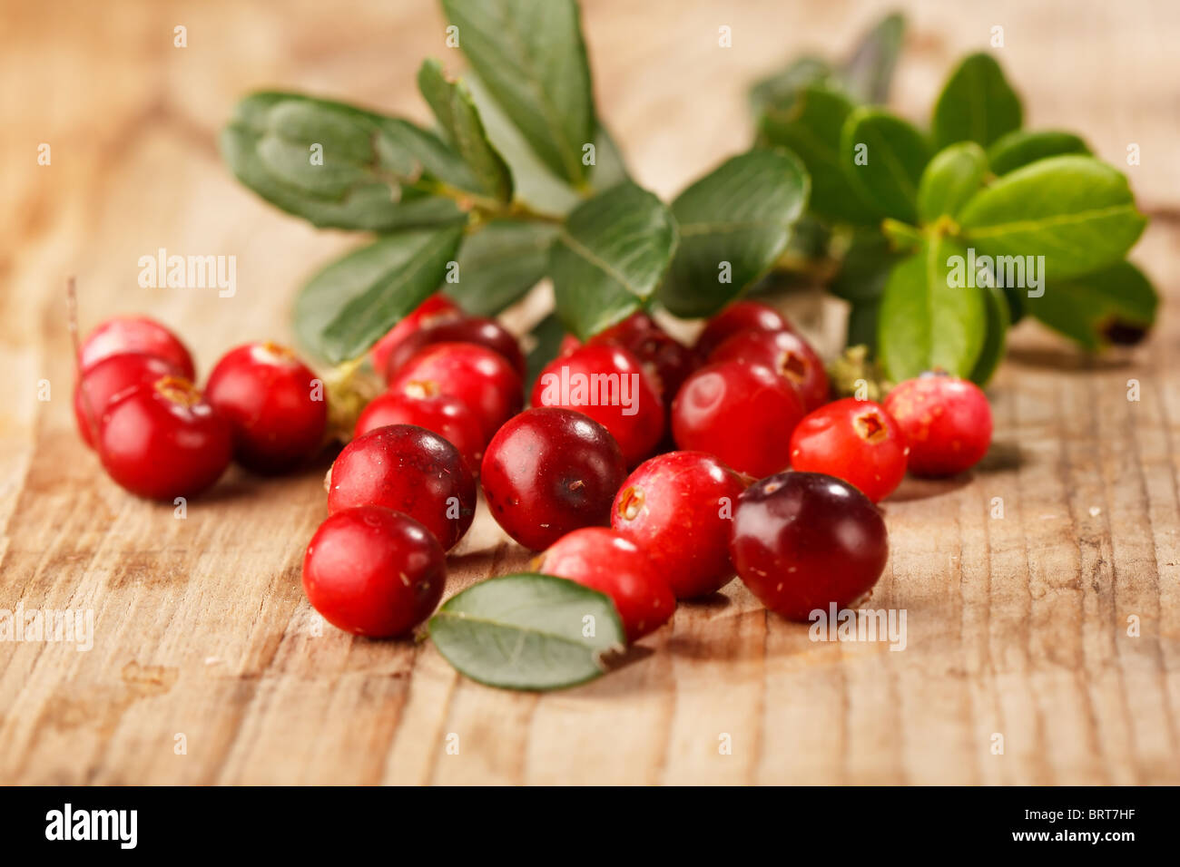 cranberries stockfotos cranberries bilder alamy. Black Bedroom Furniture Sets. Home Design Ideas