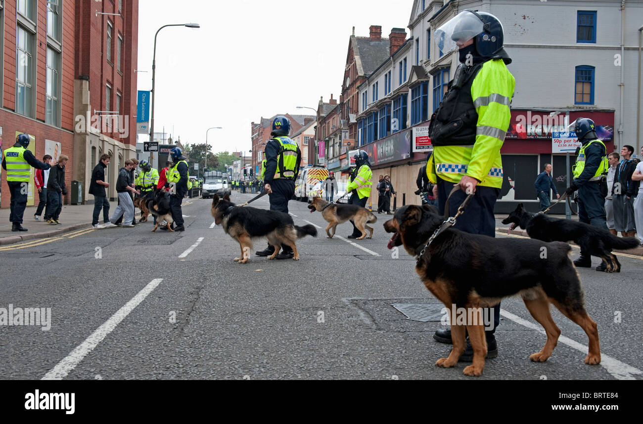 Polizeihund Einheit Wache stehen als The English Defence League demonstrieren in Leicester. 9. Oktober 2010. Stockbild